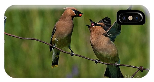 Waxwing Love.. IPhone Case