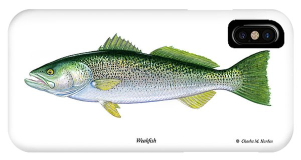 Weakfish IPhone Case