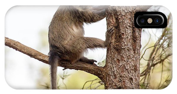 Psi iPhone Case - Weeper Capuchin by Photostock-israel