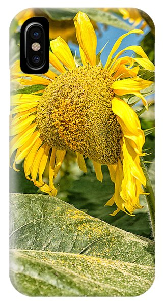 Weeping Sunflower IPhone Case