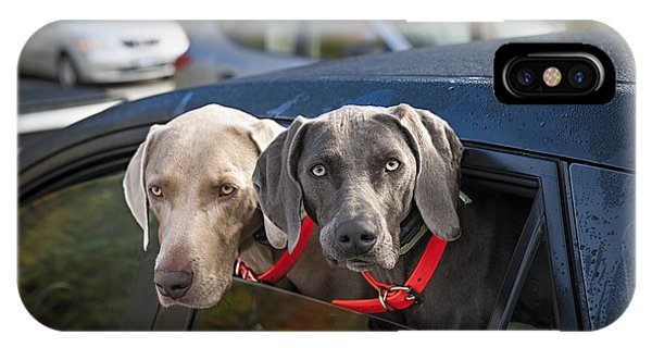 Left iPhone Case - Weimaraner Dogs In Car by Elena Elisseeva