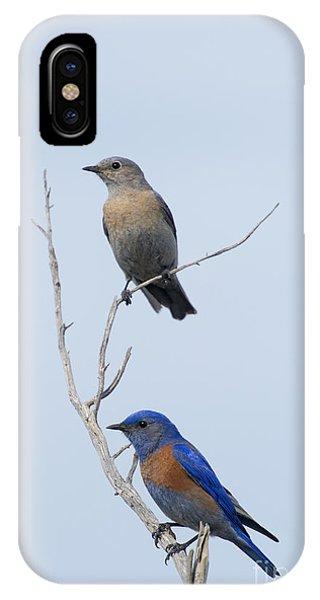 Western Bluebird Pair IPhone Case