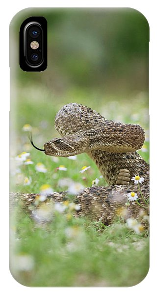 Western Diamondback Rattlesnake IPhone Case