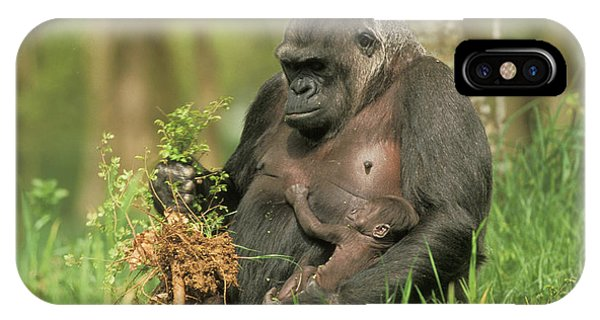 Western Gorilla And Young IPhone Case