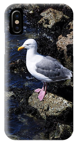Western Gull On Rocks IPhone Case