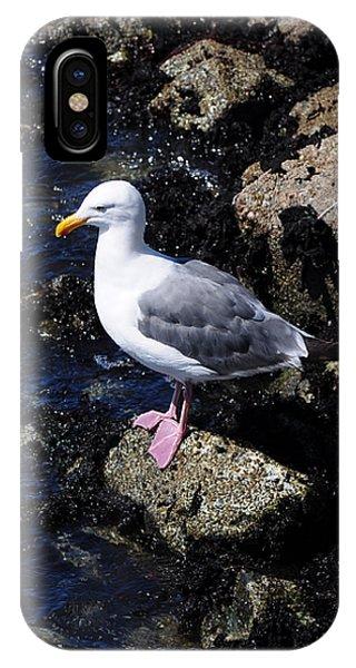 Western Gull On Rocks IPhone Case