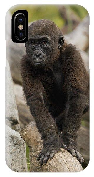 Western Lowland Gorilla Baby IPhone Case