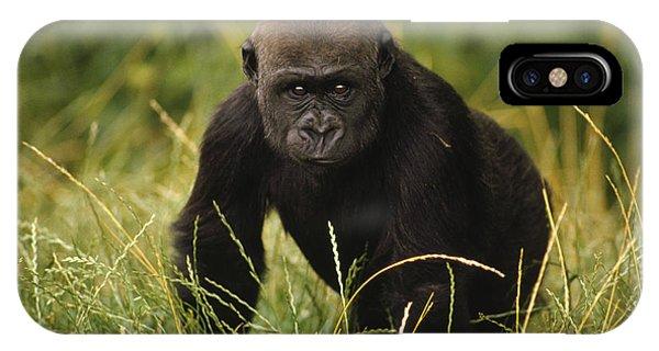 Western Lowland Gorilla Juvenile IPhone Case