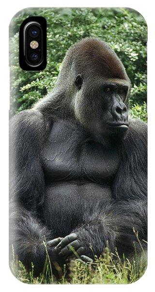 Western Lowland Gorilla Male IPhone Case