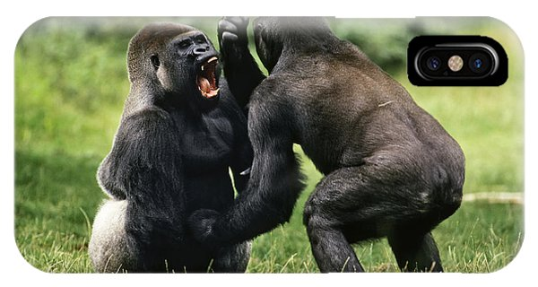 Western Lowland Gorilla Males Fighting IPhone Case