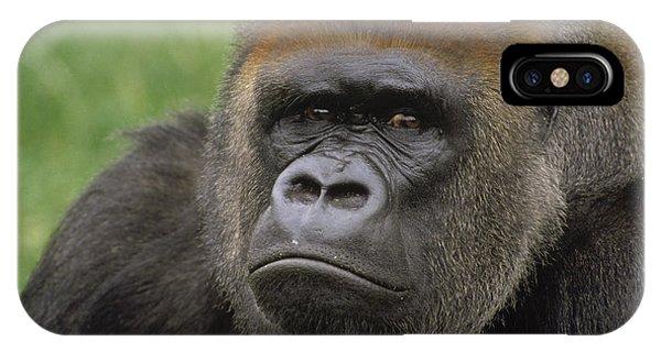 Western Lowland Gorilla Silverback IPhone Case