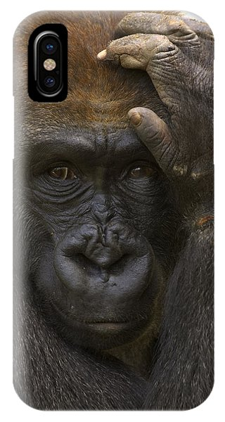 Western Lowland Gorilla With Hand IPhone Case