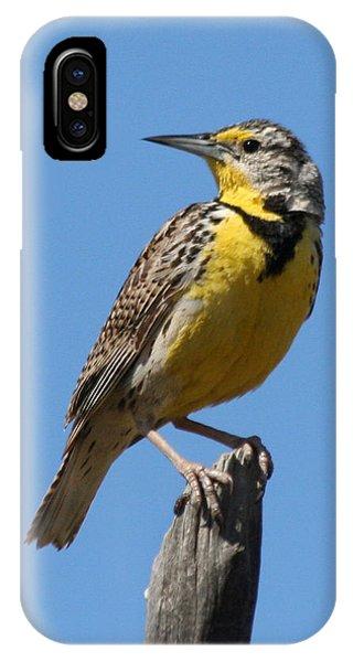 Western Meadowlark Perching IPhone Case