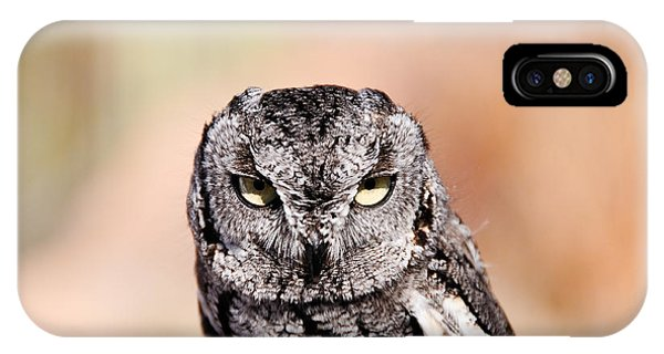 Western Screech Owl IPhone Case