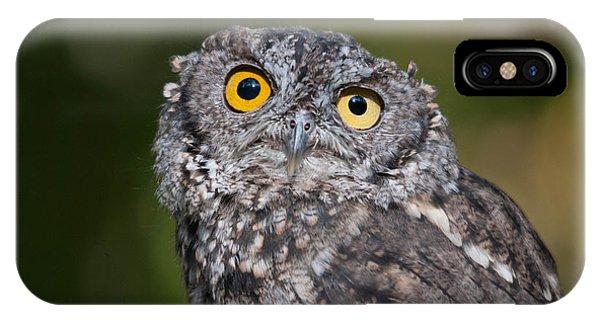 Western Screech Owl No. 3 IPhone Case