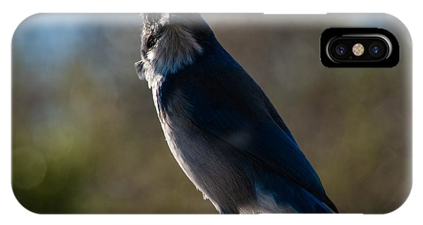 Western Scrub Jay 2594 IPhone Case
