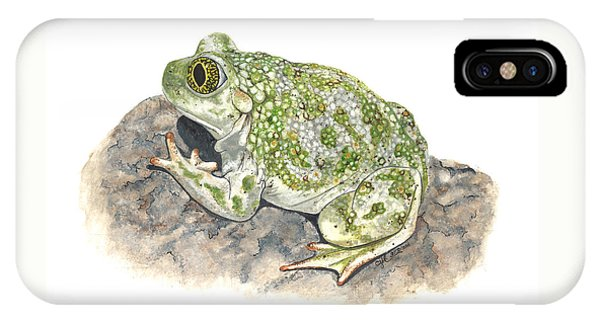 Western Spadefoot IPhone Case