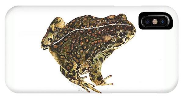 Western Toad IPhone Case
