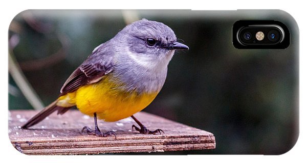 Western Yellow Robin IPhone Case