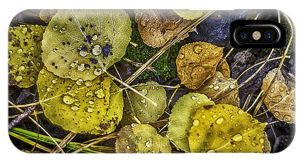 IPhone Case featuring the photograph Wet Aspen Floor by Bitter Buffalo Photography
