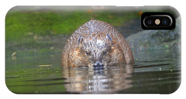 Wet Beaver IPhone Case