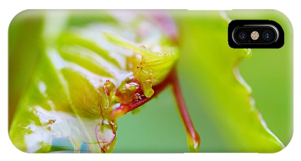 Wet Grape Leaf  IPhone Case