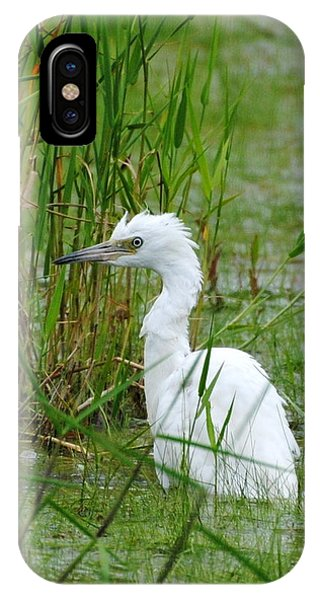Wet Juvenile Little Blue Heron IPhone Case
