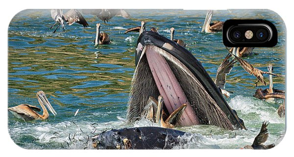 Whale Almost Eating A Pelican IPhone Case