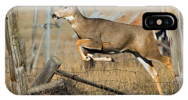 White Tailed Deer iPhone Case - What Fence by Mike  Dawson