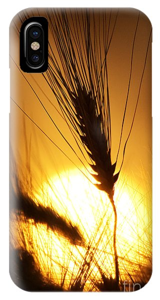 Wheat At Sunset Silhouette IPhone Case