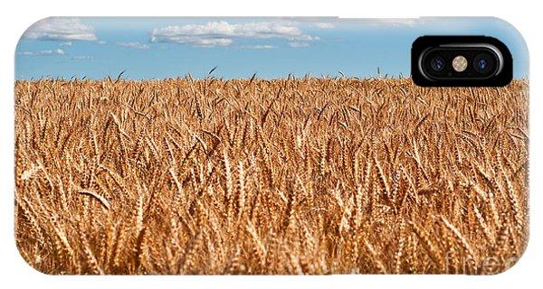 Wheat Field In Blue Sky IPhone Case