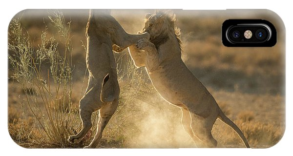Lions iPhone Case - Where Dust Will Fly by Jaco Marx