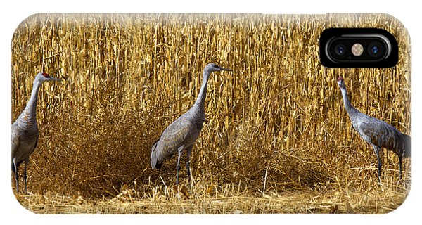 Sandhill Crane iPhone Case - Where Is The Corn by Mike  Dawson