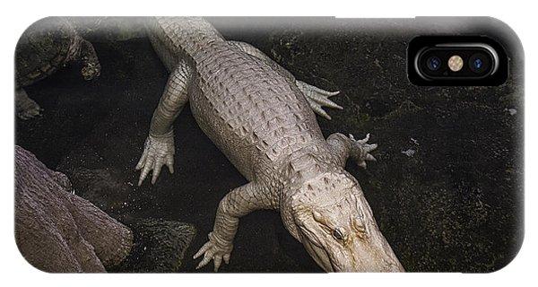 White Alligator IPhone Case