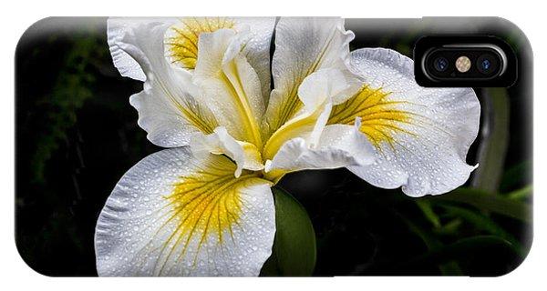 White And Yellow Bearded Iris IPhone Case