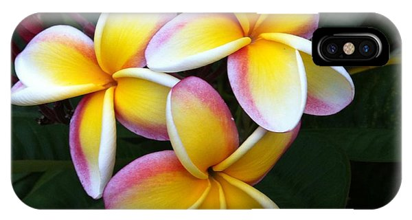 White And Yellow Plumeria IPhone Case