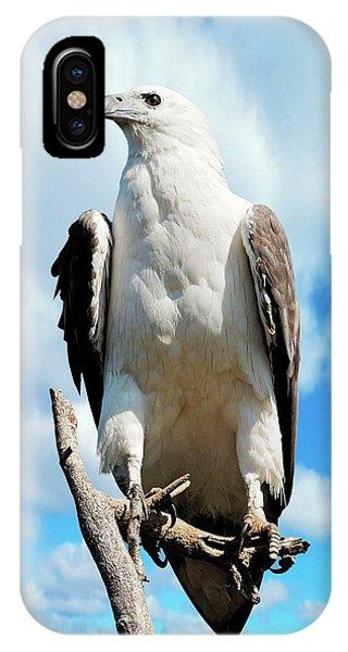 White-bellied Sea Eagle Phone Case by Bildagentur-online/mcphoto-schulz