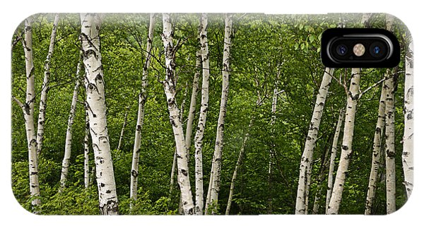 White Birch IPhone Case