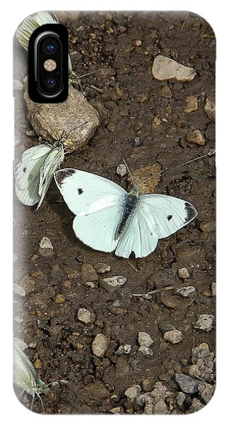 White Cabbage Butterflies Phone Case by Marie  Cardona