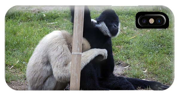 White-cheeked Gibbon - 0001 IPhone Case