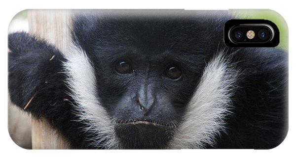 White-cheeked Gibbon - 0006 IPhone Case