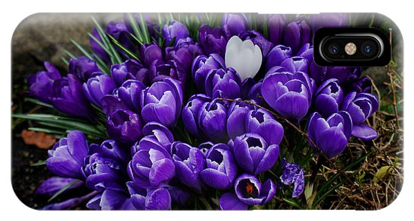 White Crocus On A Field Of Purple Phone Case by Ron Roberts
