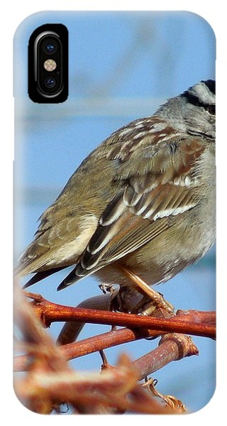 White Crowned Sparrow IPhone Case