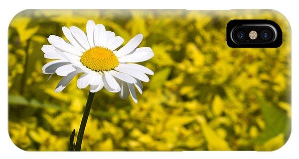 White Daisy In Yellow Garden IPhone Case
