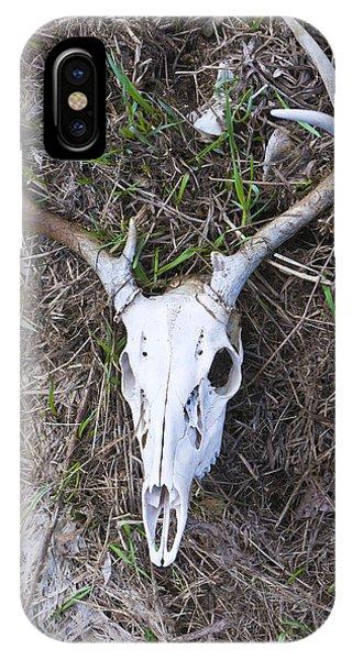 White Deer Skull In Grass IPhone Case