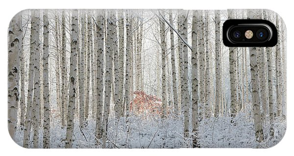 Birch Tree iPhone Case - White by Donghee, Han