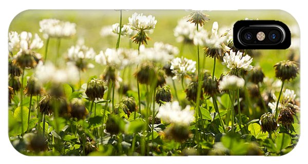 White Dutch Clover Wild Plants In The Sunshine IPhone Case