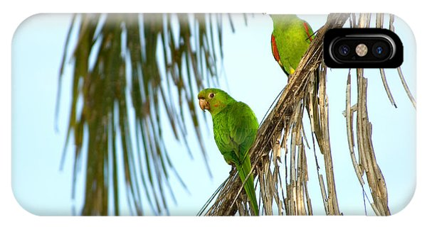 White-eyed Parakeets, Brazil IPhone Case