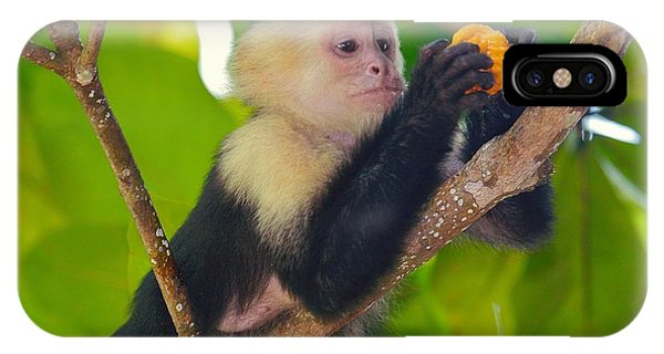 White-faced Capuchin Phone Case by Brian Magnier