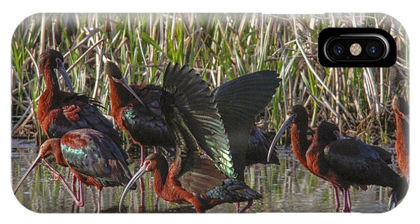 White-faced Ibis  Phone Case by Jill Bell